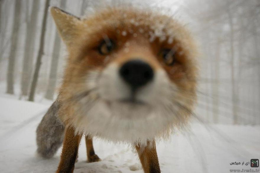 تصاویر جالب و دیدنی از حیوانات عکاس