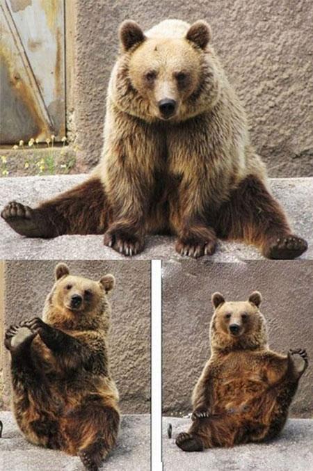 حرکات کششی این خرس در باغ وحش باعث حیرت دیگران شده است , جالب و خواندنی