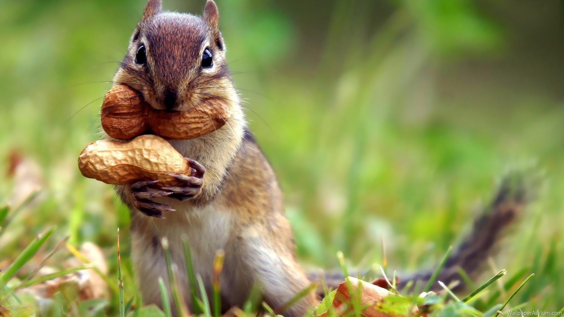 http://s3.picofile.com/file/8203821434/Squirrel_Wallpaper_15.jpg