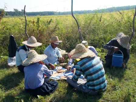 کشاورز و کشاورزی روستای تره تنگده طولگیلان