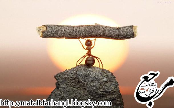 اجابت دعای مورچه،مرجـع مطالـب فرهنـگی مذهبـی
