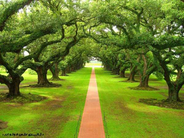 باغ درختان سرسبز
