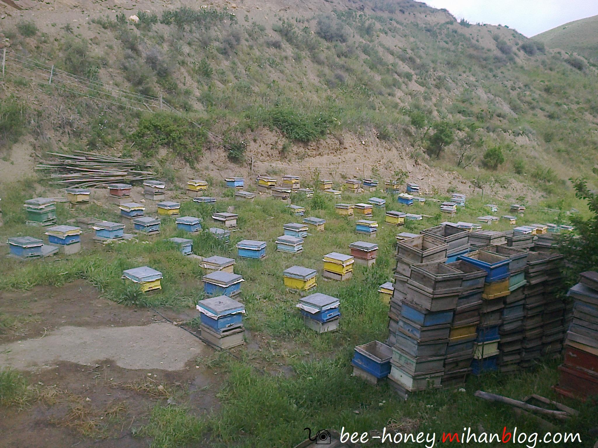 احمد قدیمی-زنبورستان