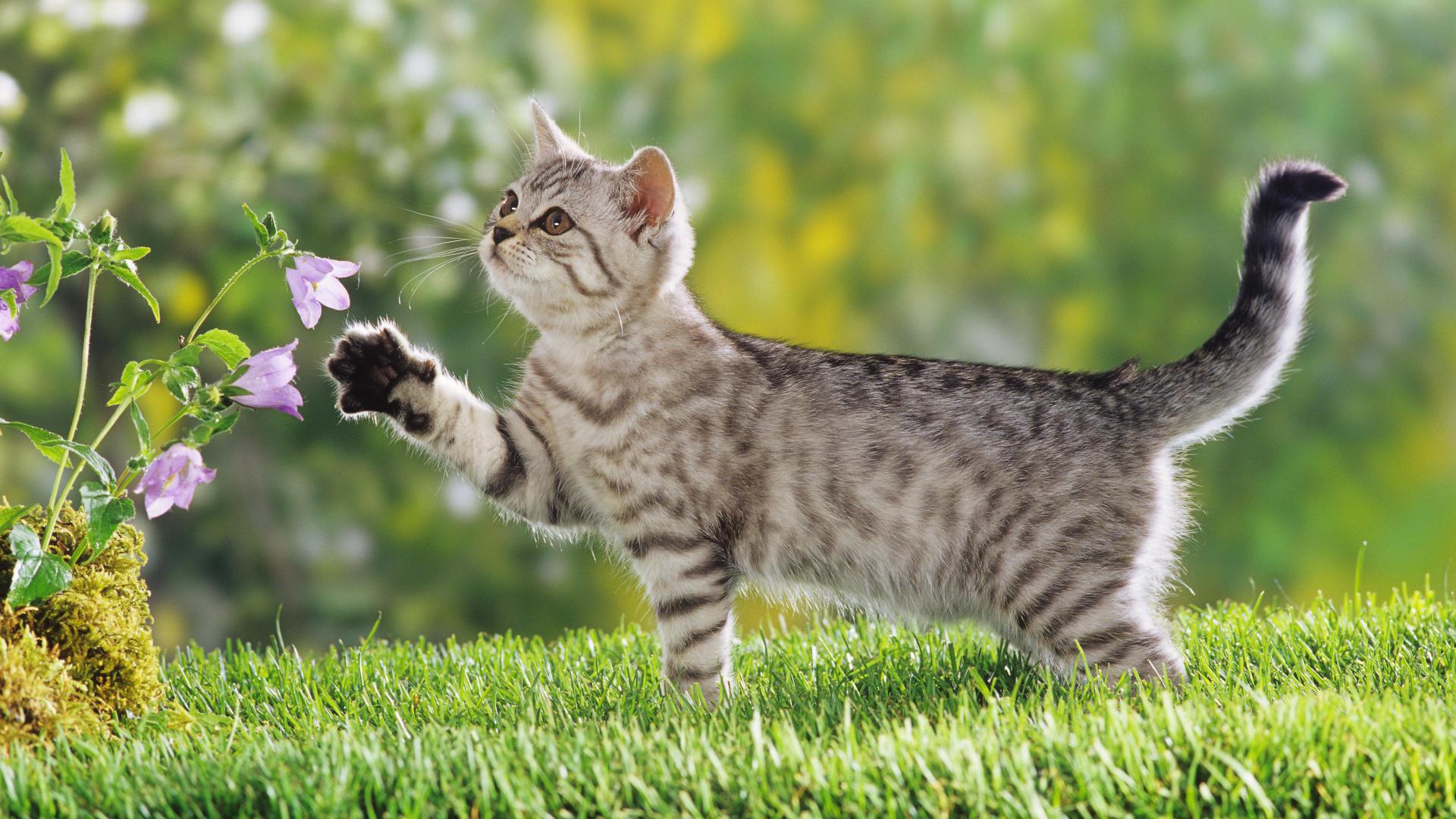 تصویر زیبای گربه