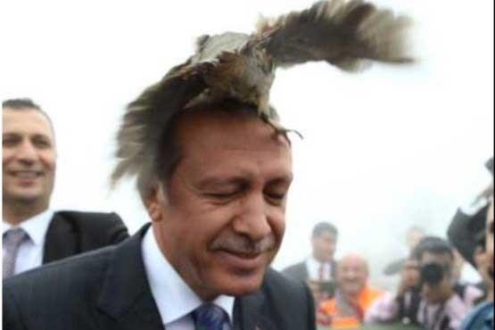 این پرنده روی سر اردوغان نشست ! , اخبار گوناگون
