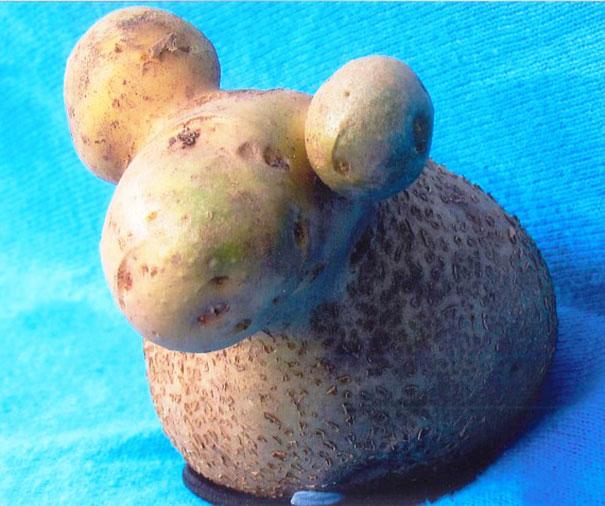 میوه هایی با ظاهر عجیب و غریب!