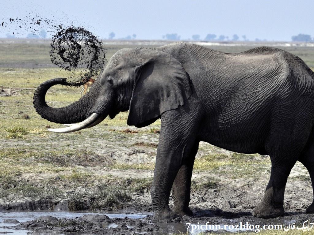 تصاویر جالب و دیدنی از حیوانات سری جدید