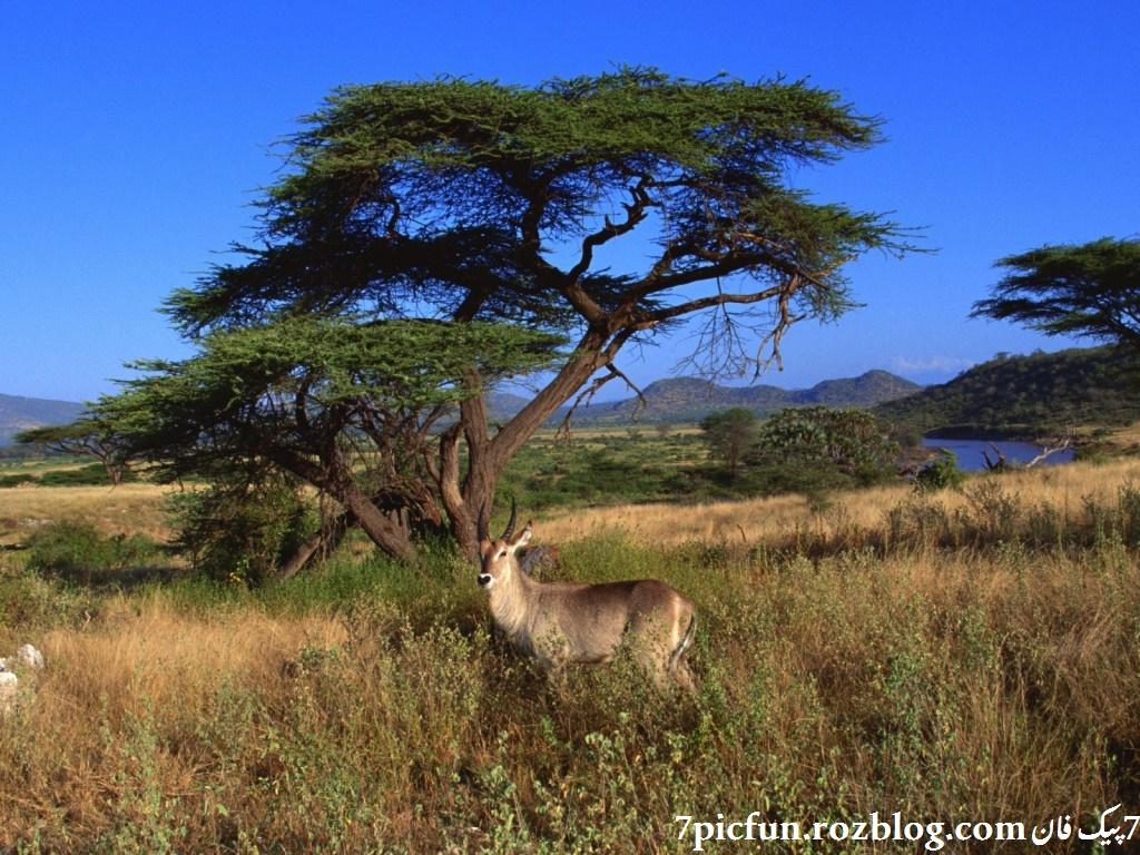 تصاویر بسیار زیبا و دیدنی از حیوانات سری جدید