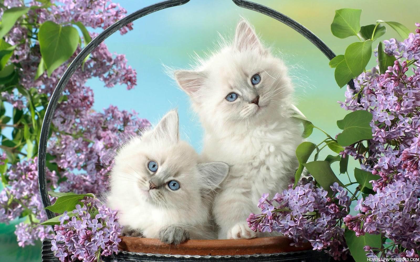 تصویر دو گربه ی ناز