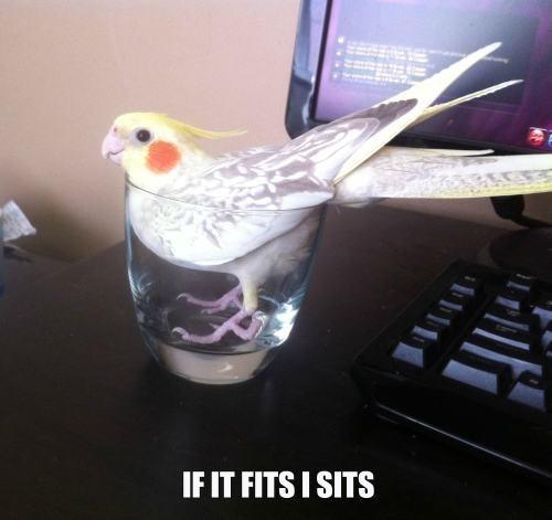تصاویر جالب و خنده دار از حیوانات