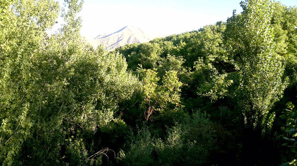 جنگل های گردو در روستای ارلان
