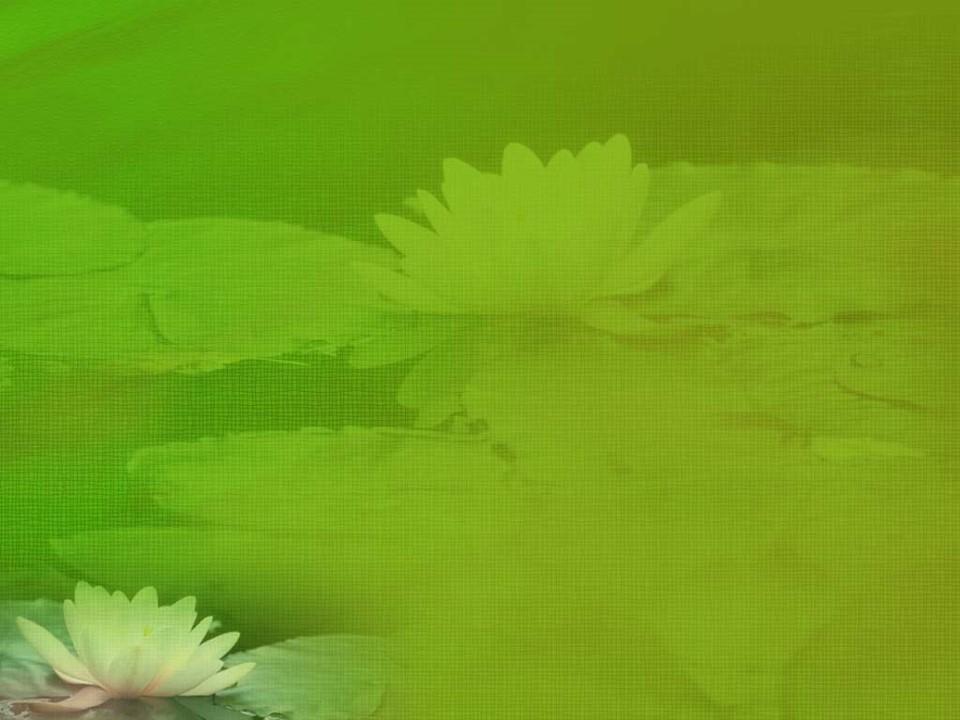 قالب پاورپوینت گل زیبا 8