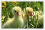 تصاویر زیبا از حیوانات سه تایی