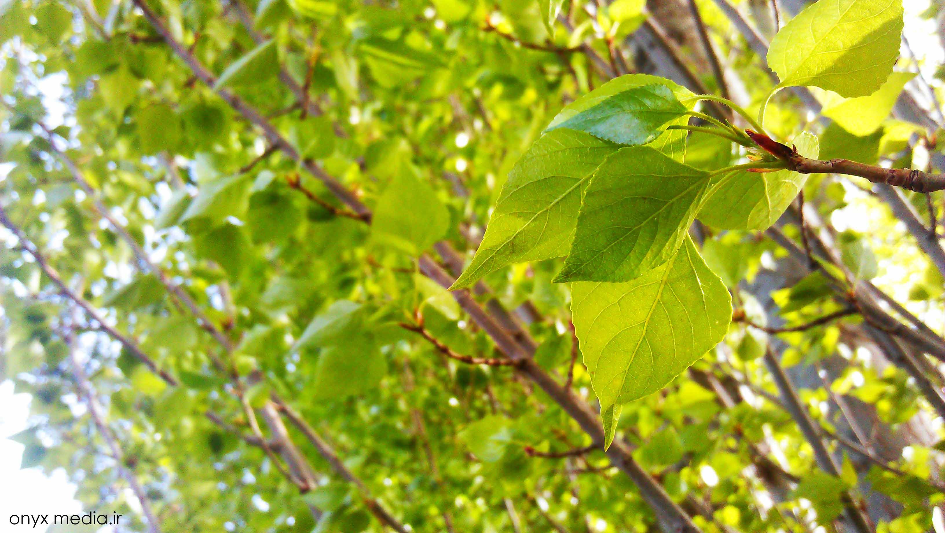عكس با کیفیت از برگ درختان