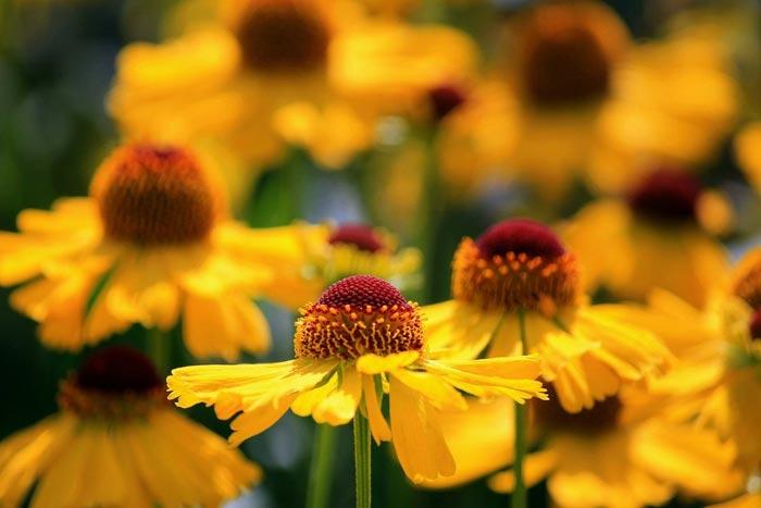گل های زیبا و رنگارنگ,گل های زیبا,گل های بهاری,عکس گل