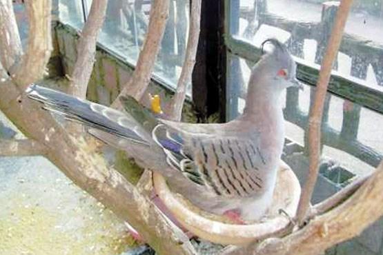 سرقت پرنده های 100 میلیونی توسط یک دختر , اجتماعی