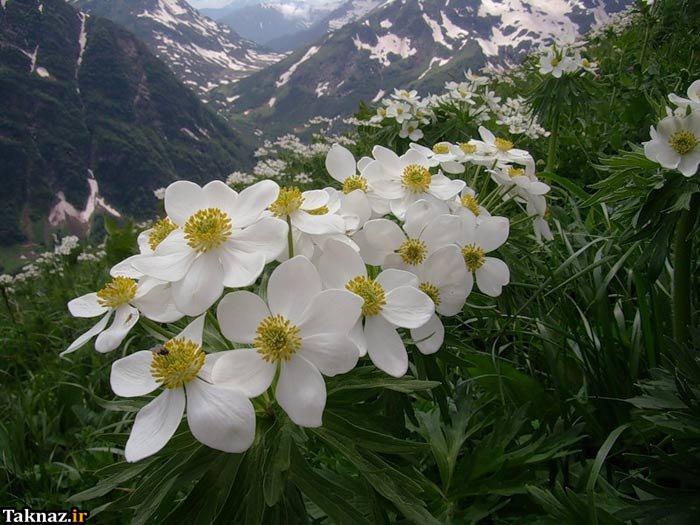 عکس گل گیاه
