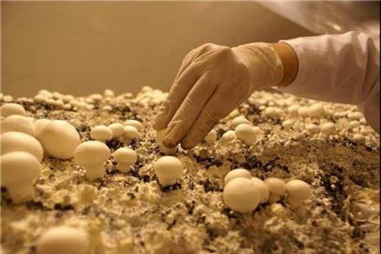 جوانی که با تولید قارچ میلیاردر شد , اقتصادی