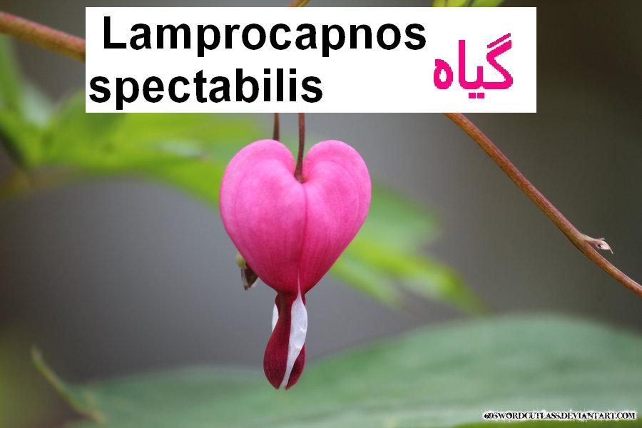 http://s3.picofile.com/file/8214672634/lamprocapnos_spectabilis_by_69swordcutlass_d590idt.jpg