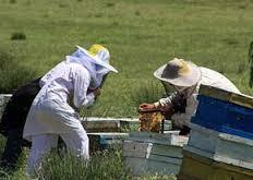 دانلود گزارش کاراموزی پرورش زنبور عسل
