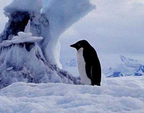 http://s3.picofile.com/file/8214935550/adelie_penguin4.jpg