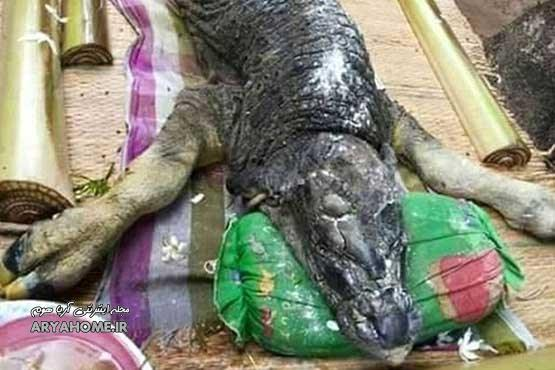 کشف جسد یک هیولای نیمه تمساح - نیمه بوفالو , تصاویر دیدنی