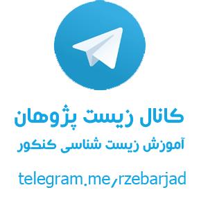 Telegram  Wikipedia