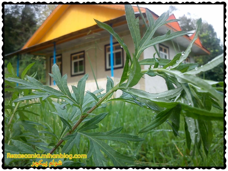باران پاییزی روستای شولم