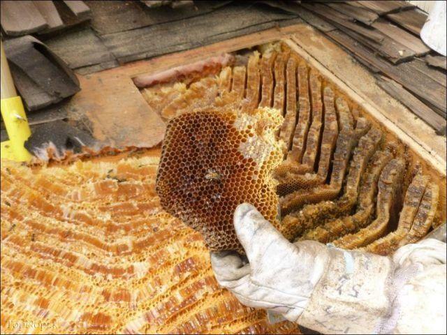 توليد عسل طبيعي در دامنه كوه هاي كندوان