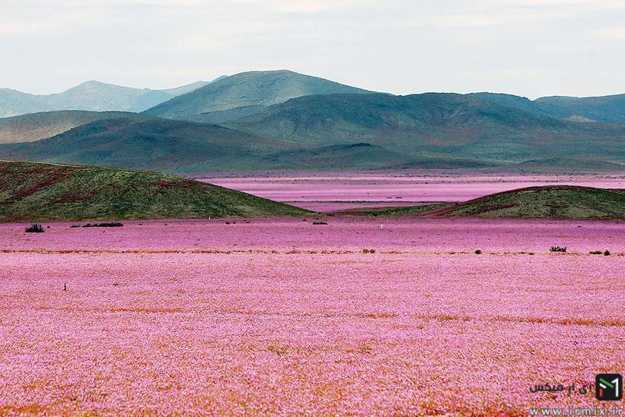تصاویر جالب و دیدنی از کویر آتاکاما در شیلی