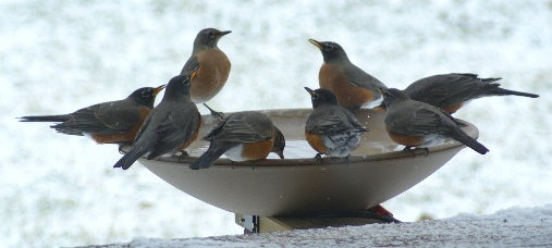 جذب پرندگان در زمستان