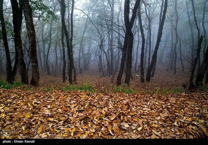 طبیعت پاییزی جنگل های گلستان , طبیعت زیبا , مناظر زیبا , تصاویر دیدنی از پاییز , جنگل های زیبا
