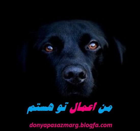 http://s3.picofile.com/file/8222784276/10.jpg