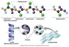 دانلود پاورپوینت زیستشناسی سلولی ملکولی