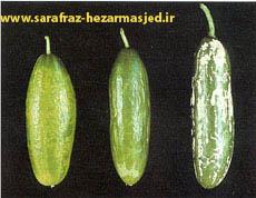 (www.sarafraz-hezarmasjed.ir) کمبود مواد غذایی