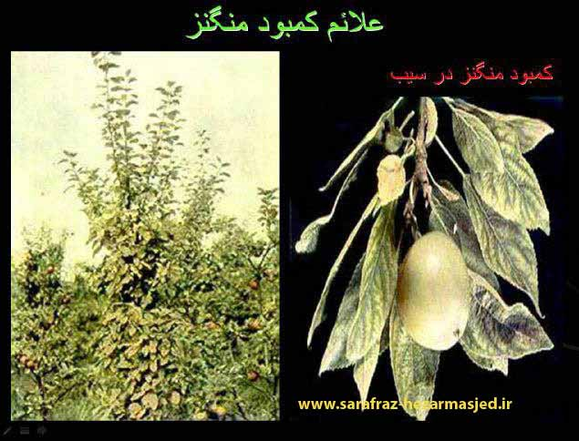 (www.sarafraz-hezarmasjed.ir) کمبود منگنز