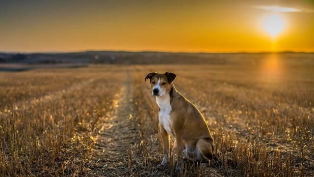 تصاویر سگ