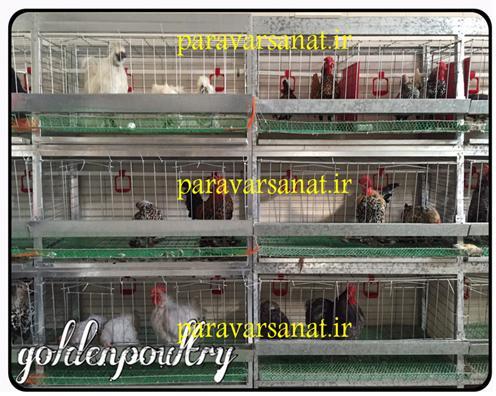 قفس مرغ و خروس زینتی
