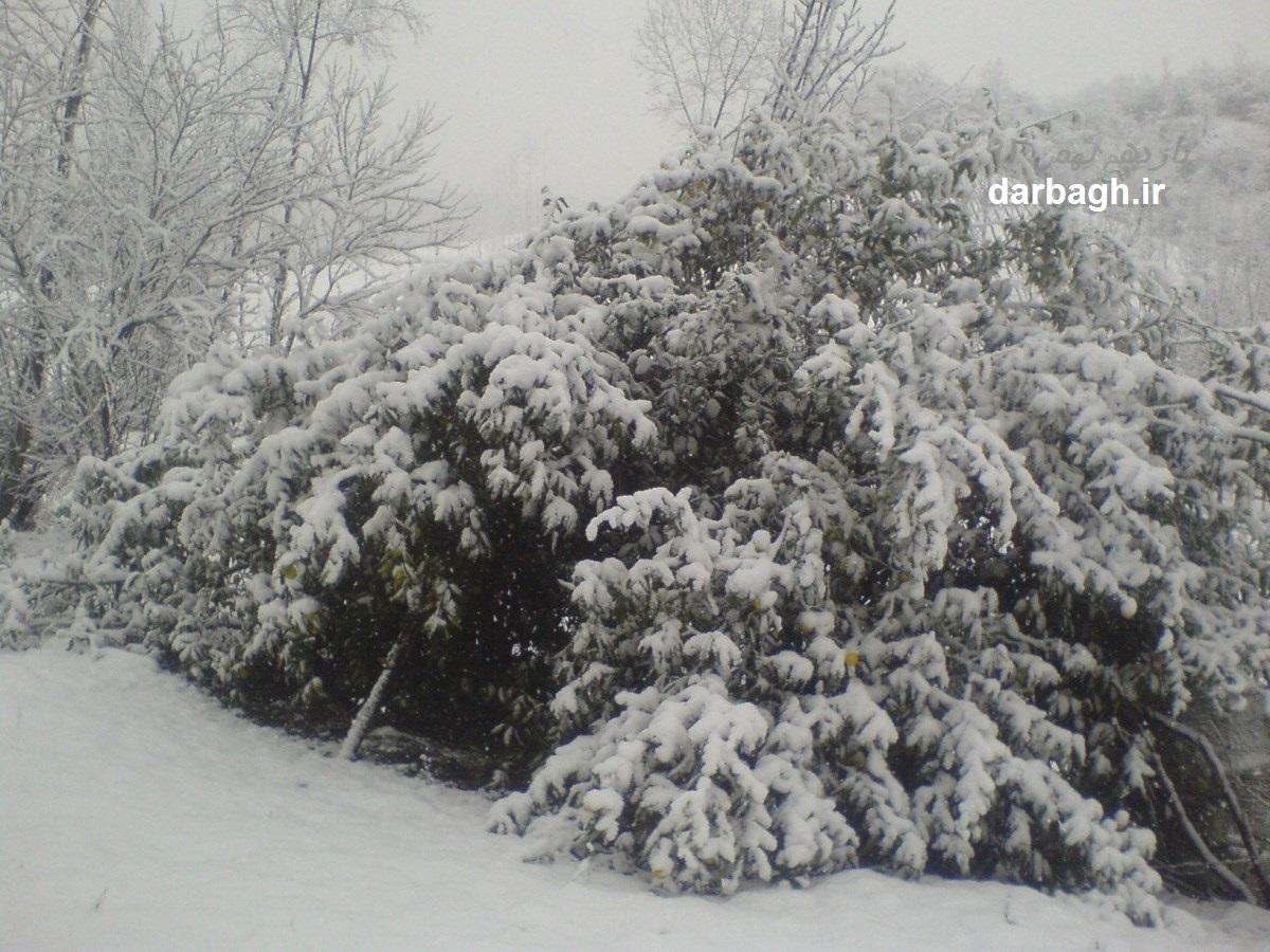barf darbagh ir 11 11 1  اولین برف زمستانی 92 دارباغ بخش اول