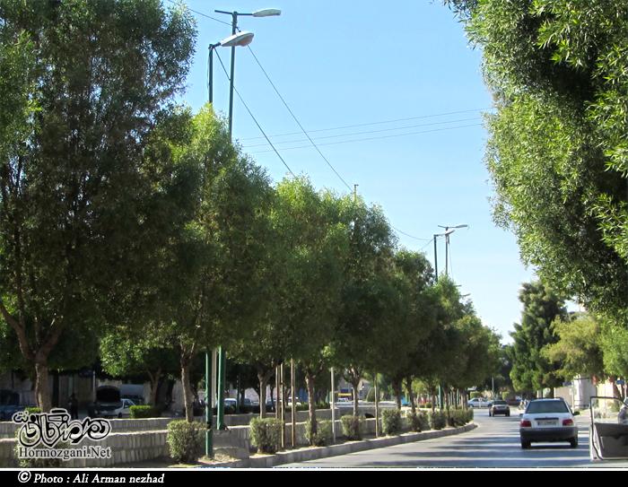 http://s3.picofile.com/file/8229846484/Hormozgani_ali2.jpg