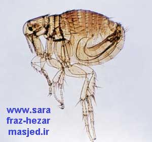www.sarafraz-hezarmasjed.ir کک