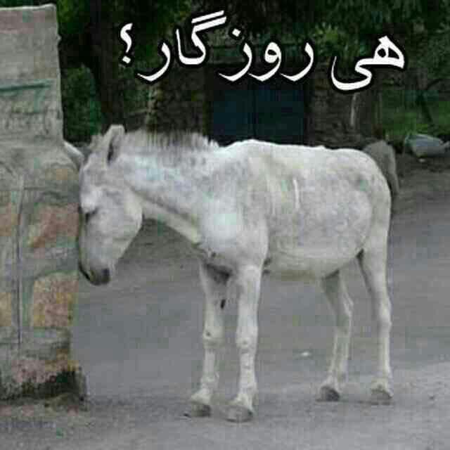 Image result for خر ناراحت