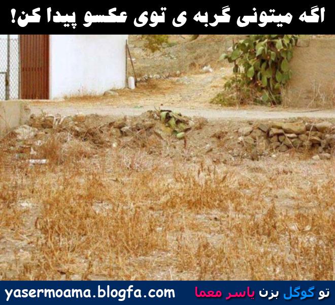 Image result for معما گربه را در تصویر پیدا کن