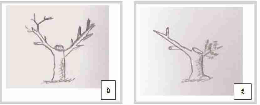 جوان سازی درختان تربیت شده