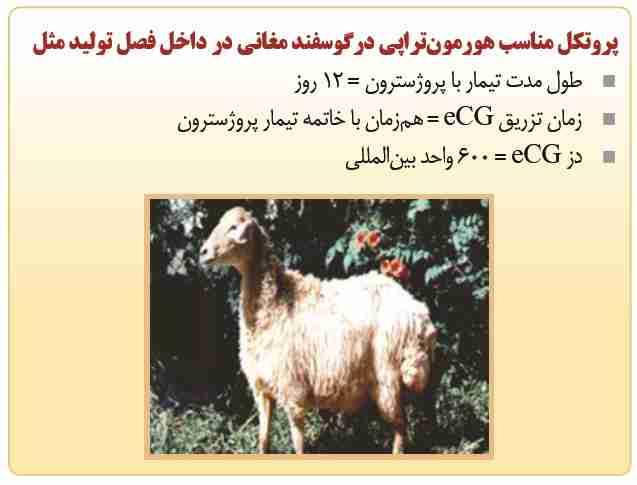 پروتوکل مناسب هورمون تراپی در گوسفند مغانی