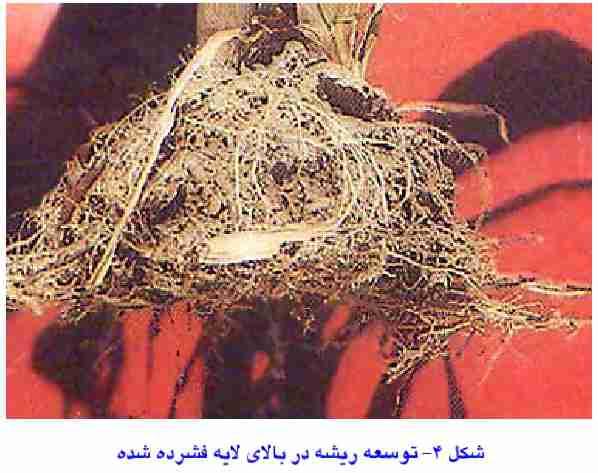 توسعه ریشه در بالای لایه فشرده شده