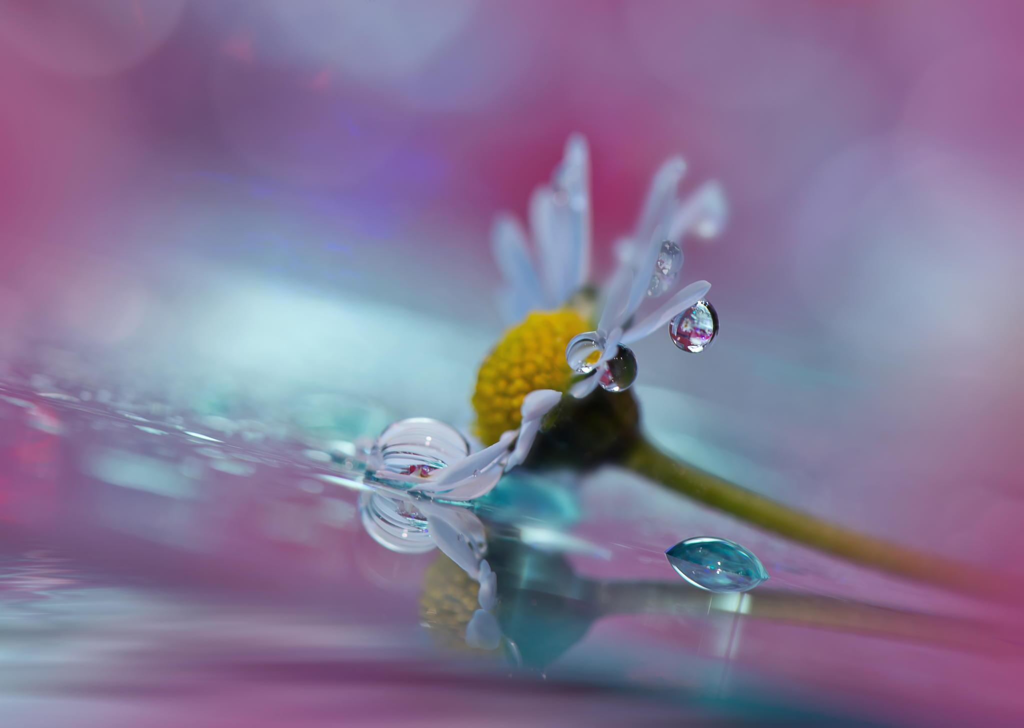 Waterdrop_Flower.jpg
