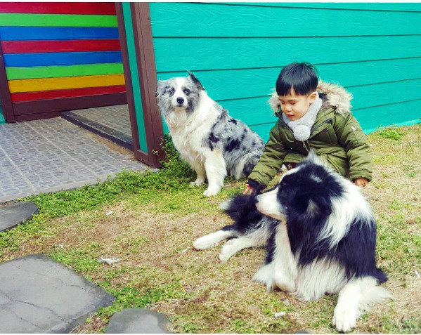 his Nephew was taking care of uncle dogs - 2017.02.25
