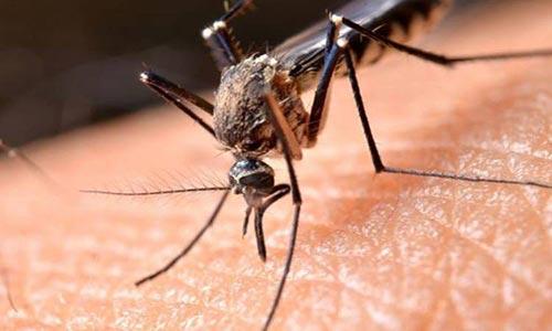 طراحی سلاحی مرگبار دربرابر پشههای ناقل مالاریا