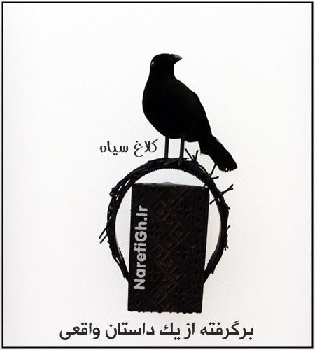 دانلود سریال (Kuzgun) کلاغ سیاه با زیرنویس فارسی چسبیده و کیفیت HD720P